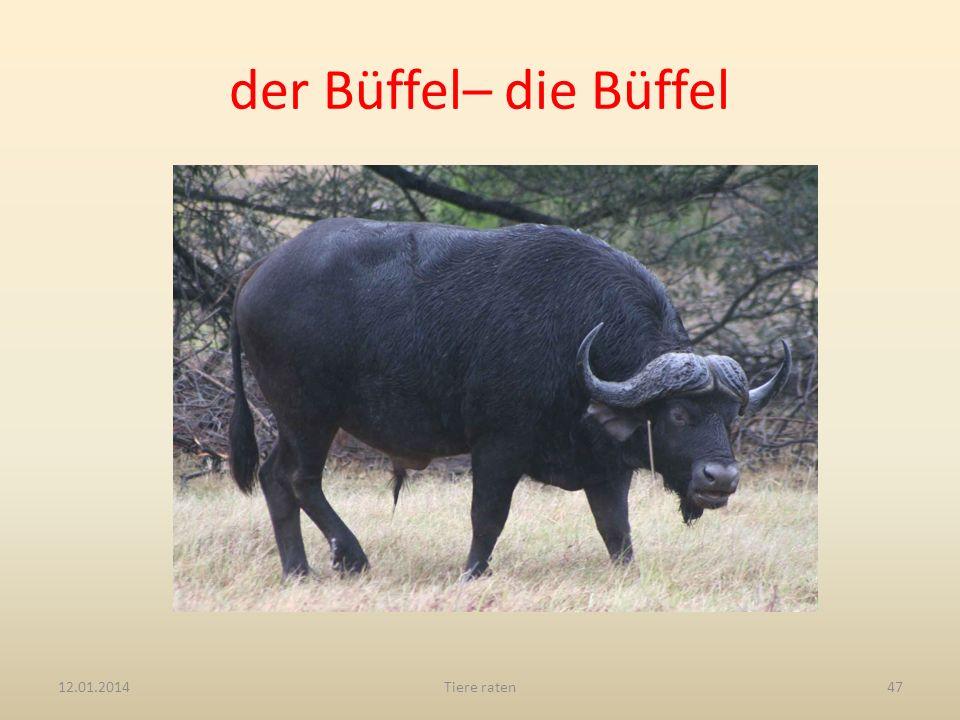 der Büffel– die Büffel 27.03.2017 Tiere raten