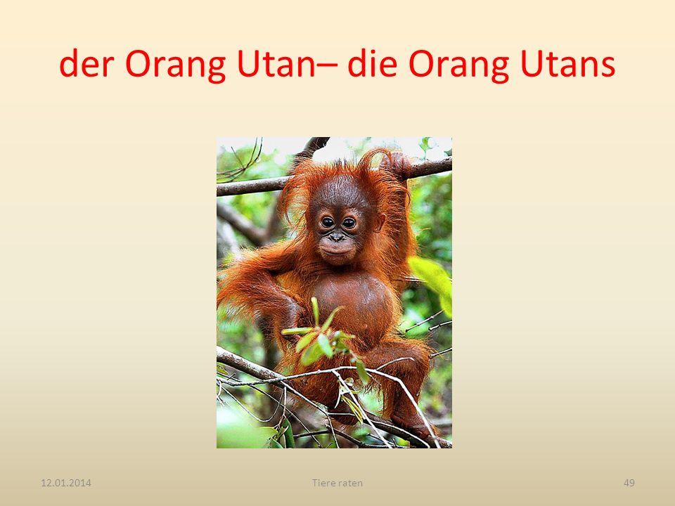 der Orang Utan– die Orang Utans