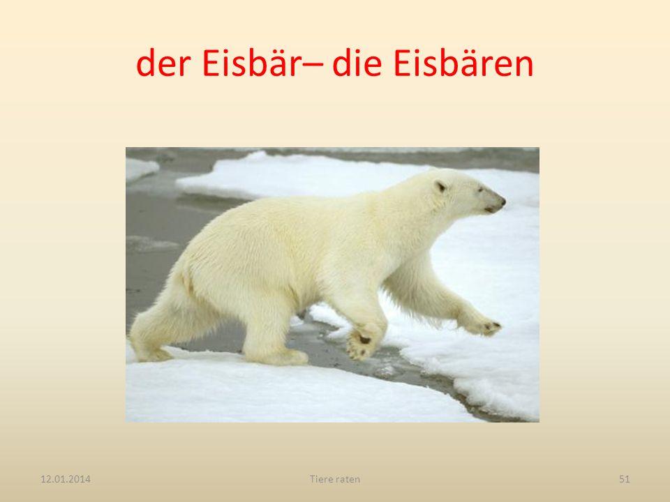 der Eisbär– die Eisbären