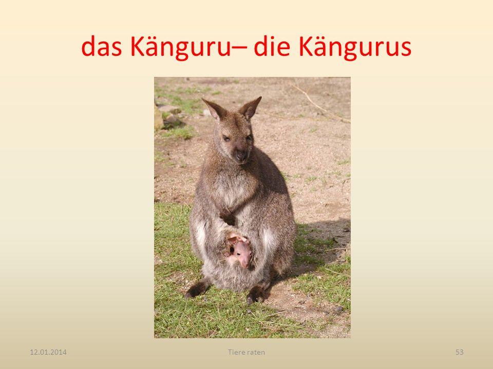 das Känguru– die Kängurus