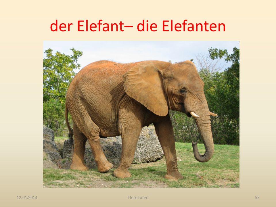 der Elefant– die Elefanten
