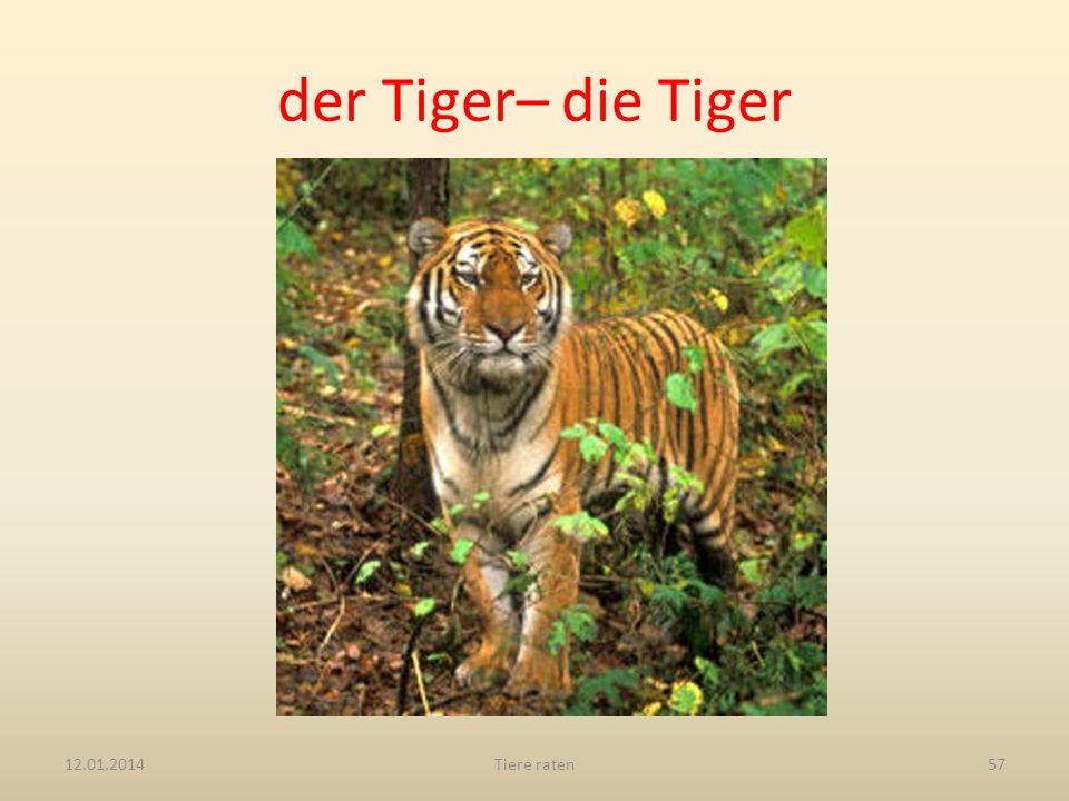der Tiger– die Tiger 27.03.2017 Tiere raten