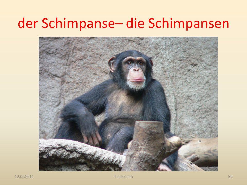 der Schimpanse– die Schimpansen