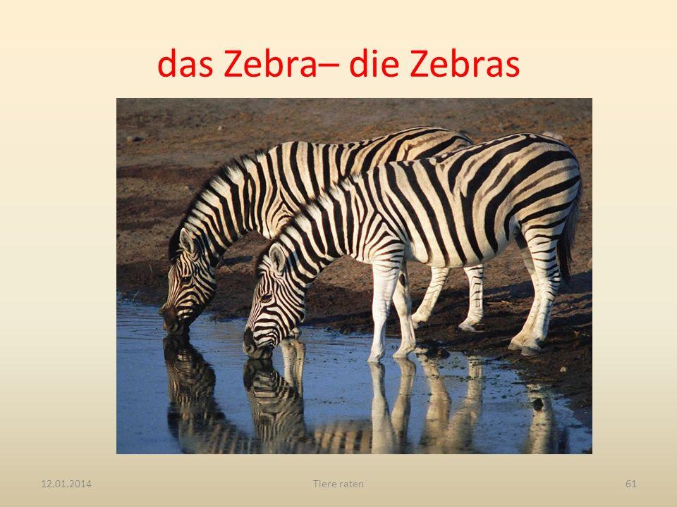 das Zebra– die Zebras 27.03.2017 Tiere raten