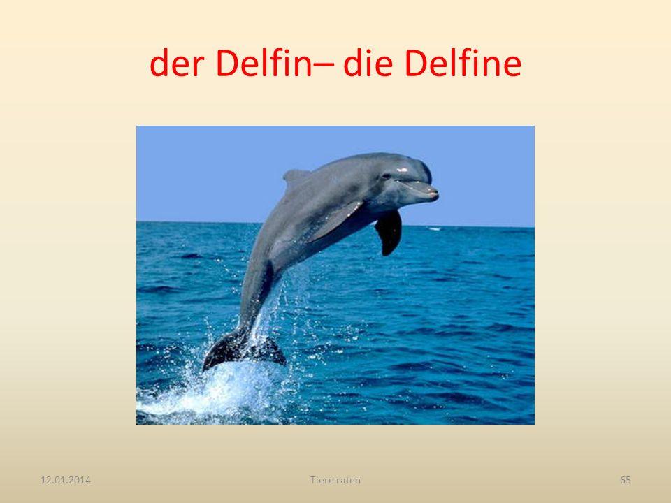 der Delfin– die Delfine
