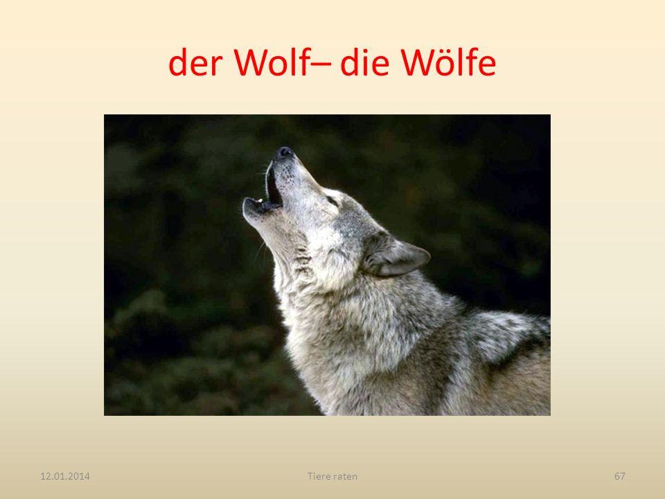 der Wolf– die Wölfe 27.03.2017 Tiere raten