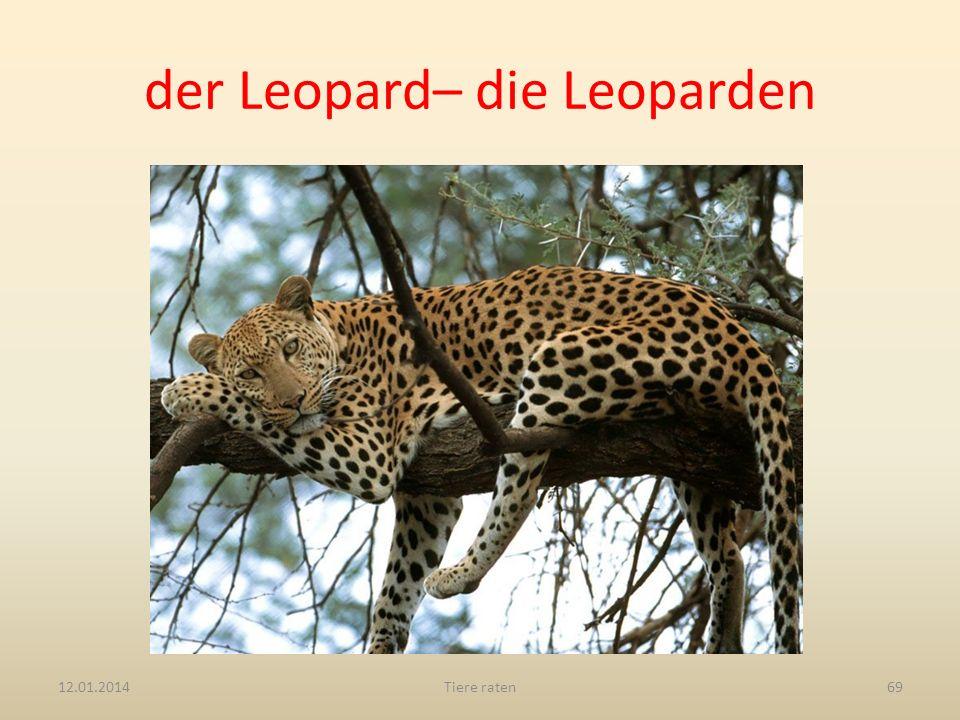 der Leopard– die Leoparden