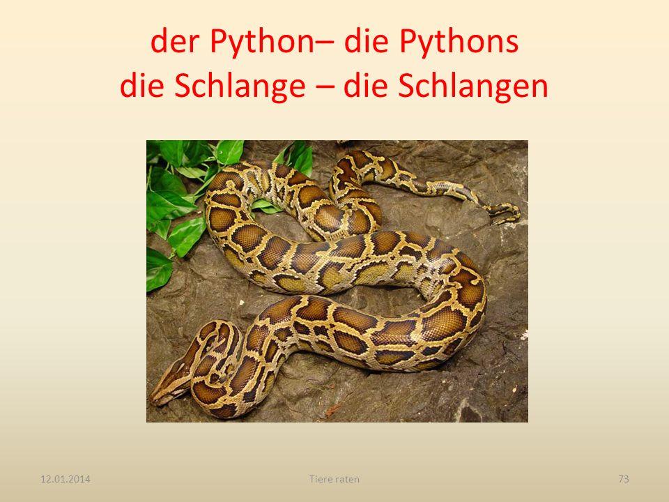 der Python– die Pythons die Schlange – die Schlangen