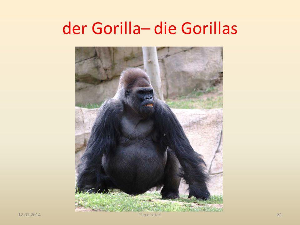 der Gorilla– die Gorillas