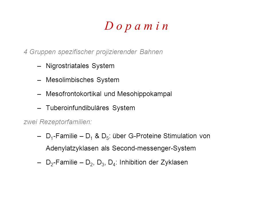 D o p a m i n 4 Gruppen spezifischer projizierender Bahnen