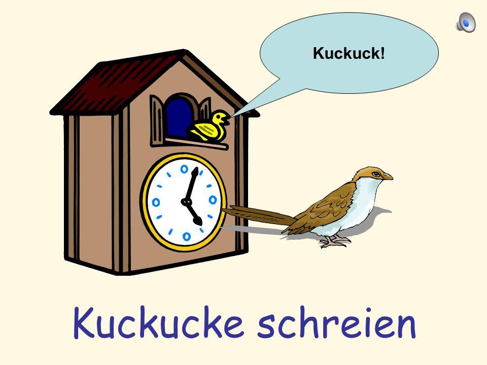 Kuckuck! Kuckucke schreien