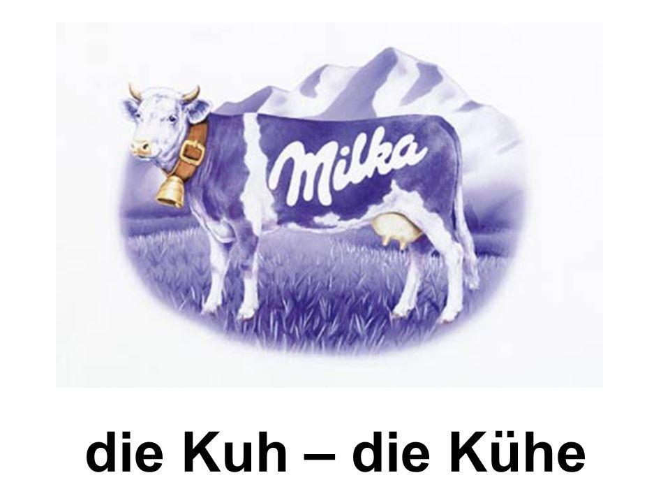die Kuh – die Kühe