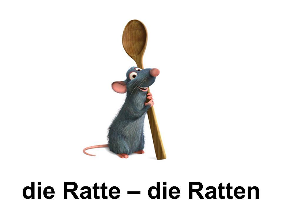 die Ratte – die Ratten