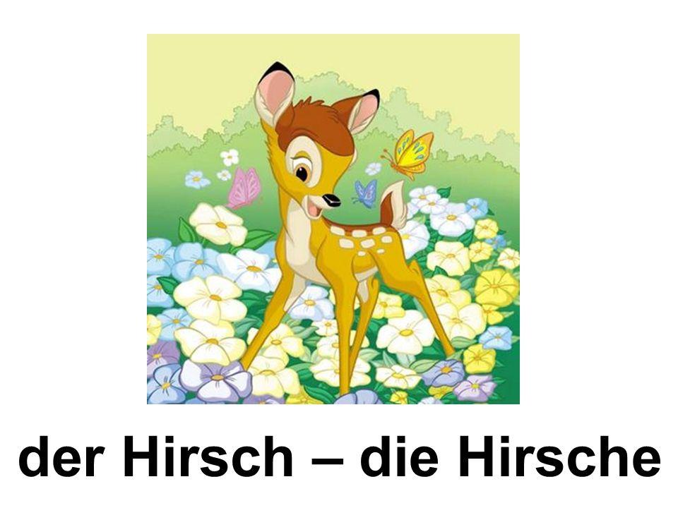 der Hirsch – die Hirsche