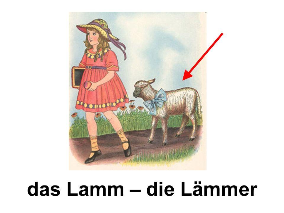 das Lamm – die Lämmer