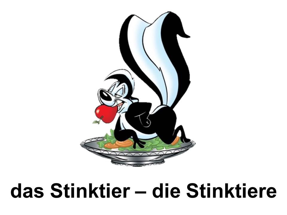 das Stinktier – die Stinktiere