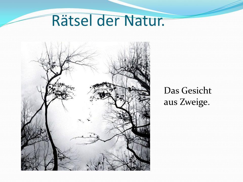 Rätsel der Natur. Das Gesicht aus Zweige.
