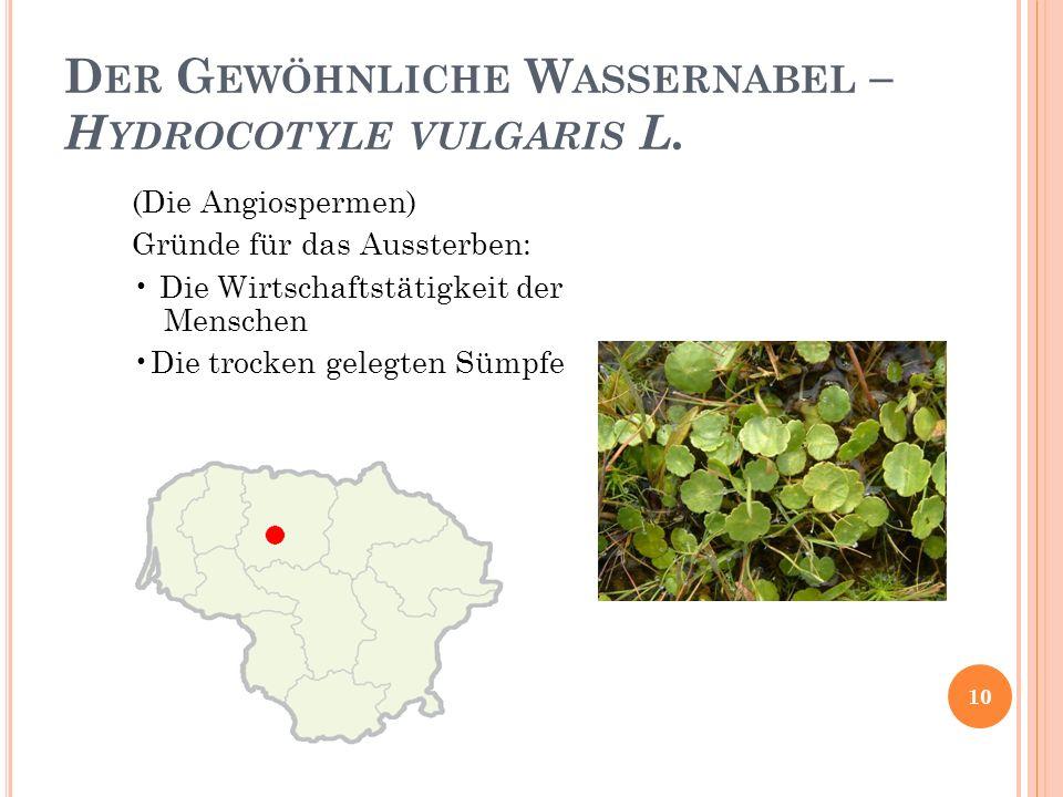 Der Gewöhnliche Wassernabel – Hydrocotyle vulgaris L.