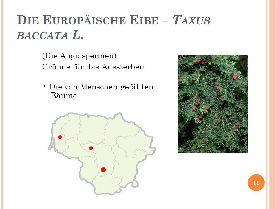Die Europäische Eibe – Taxus baccata L.