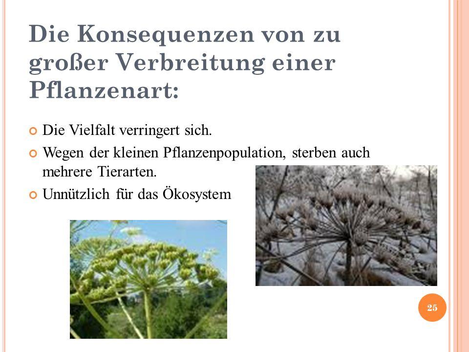 Die Konsequenzen von zu großer Verbreitung einer Pflanzenart: