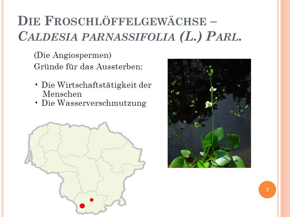 Die Froschlöffelgewächse – Caldesia parnassifolia (L.) Parl.