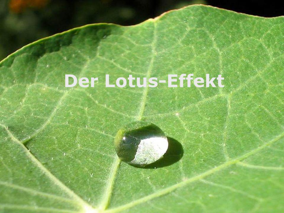 Der Lotus-Effekt Lotus Effekt