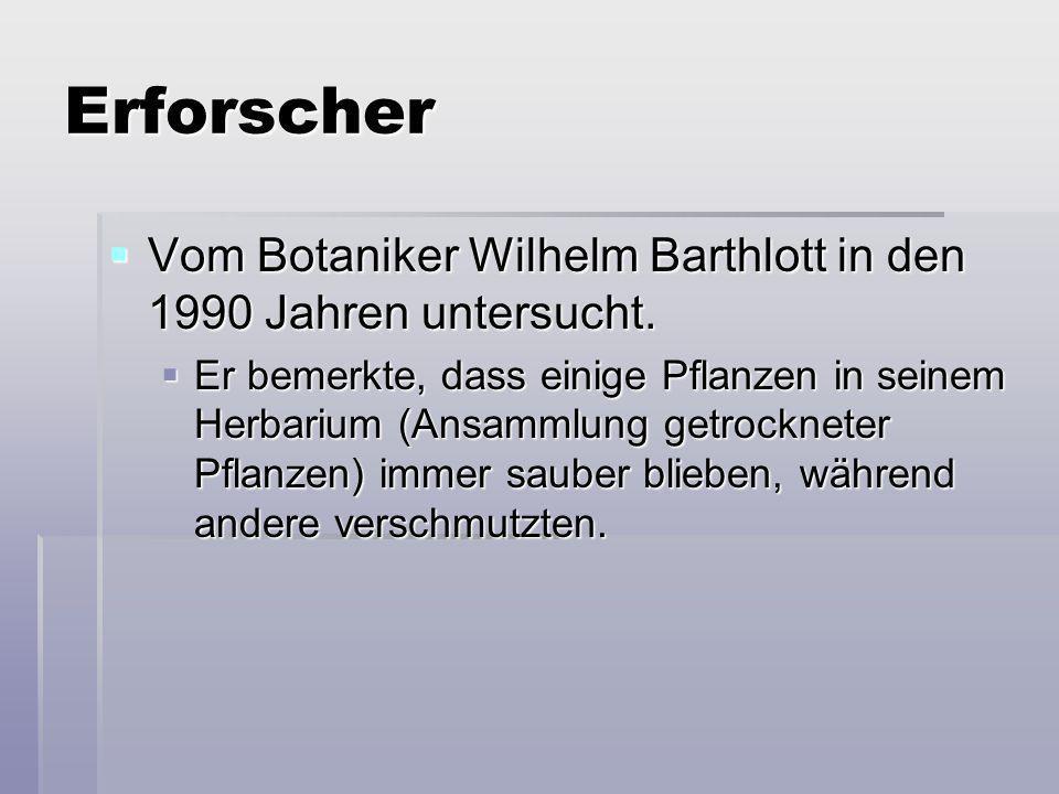 Erforscher Vom Botaniker Wilhelm Barthlott in den 1990 Jahren untersucht.