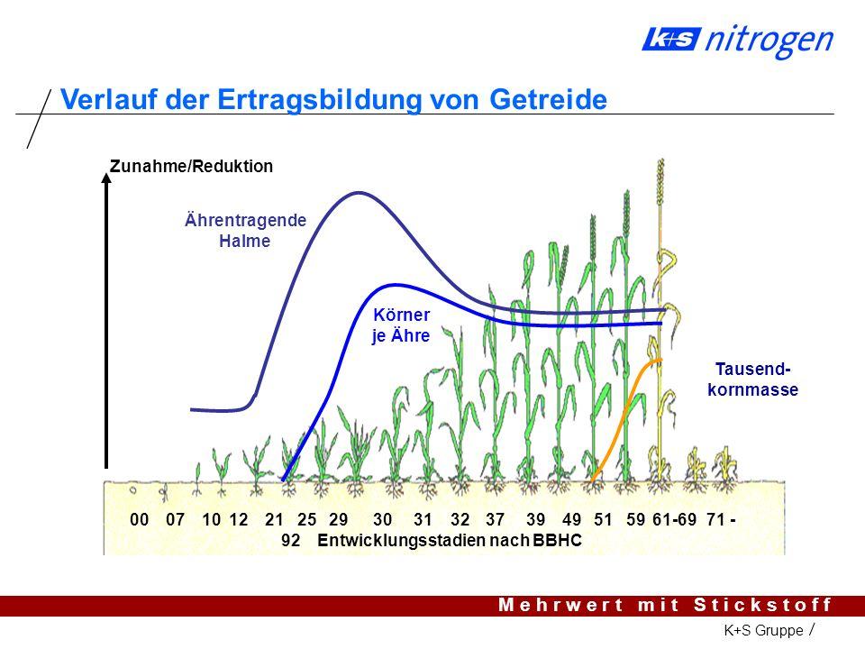 Verlauf der Ertragsbildung von Getreide