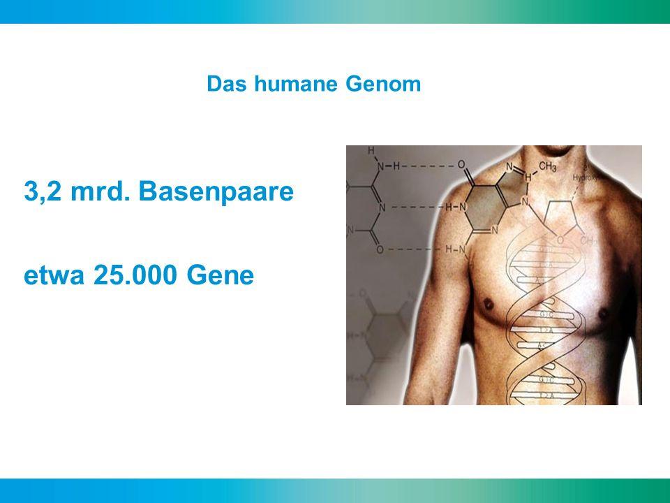 3,2 mrd. Basenpaare etwa 25.000 Gene