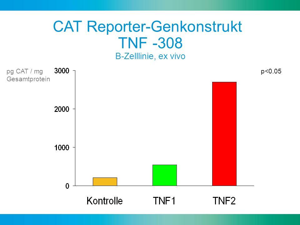 CAT Reporter-Genkonstrukt