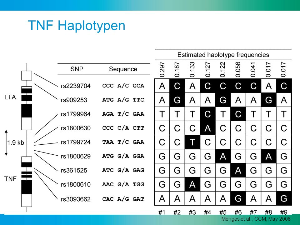 TNF Haplotypen Menges et al., CCM, May 2008
