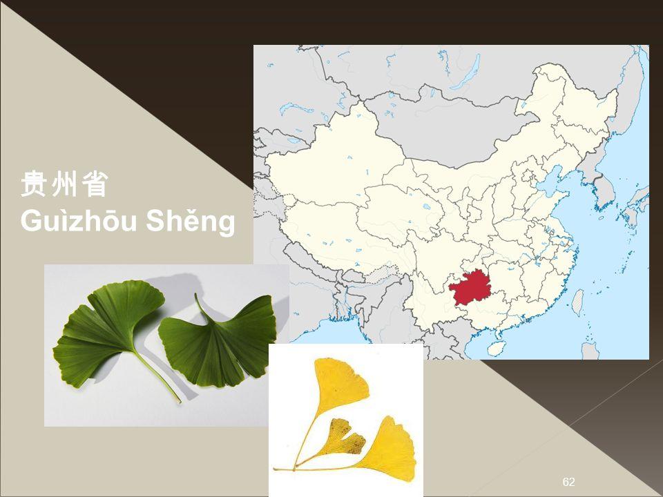 贵州省 Guìzhōu Shěng Quweetschou -ausgestorbenen Gruppe von Samenpflanzen