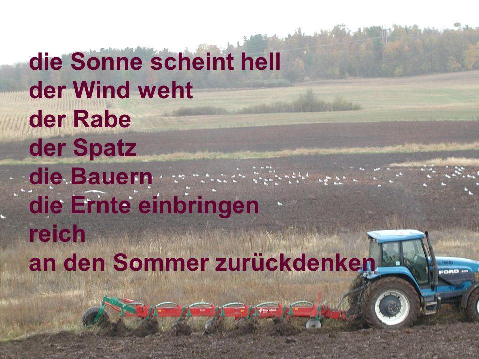die Sonne scheint hell der Wind weht. der Rabe. der Spatz. die Bauern. die Ernte einbringen. reich.