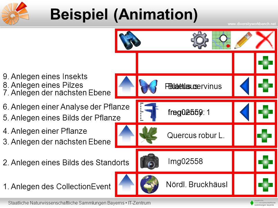 Beispiel (Animation) 9. Anlegen eines Insekts 8. Anlegen eines Pilzes
