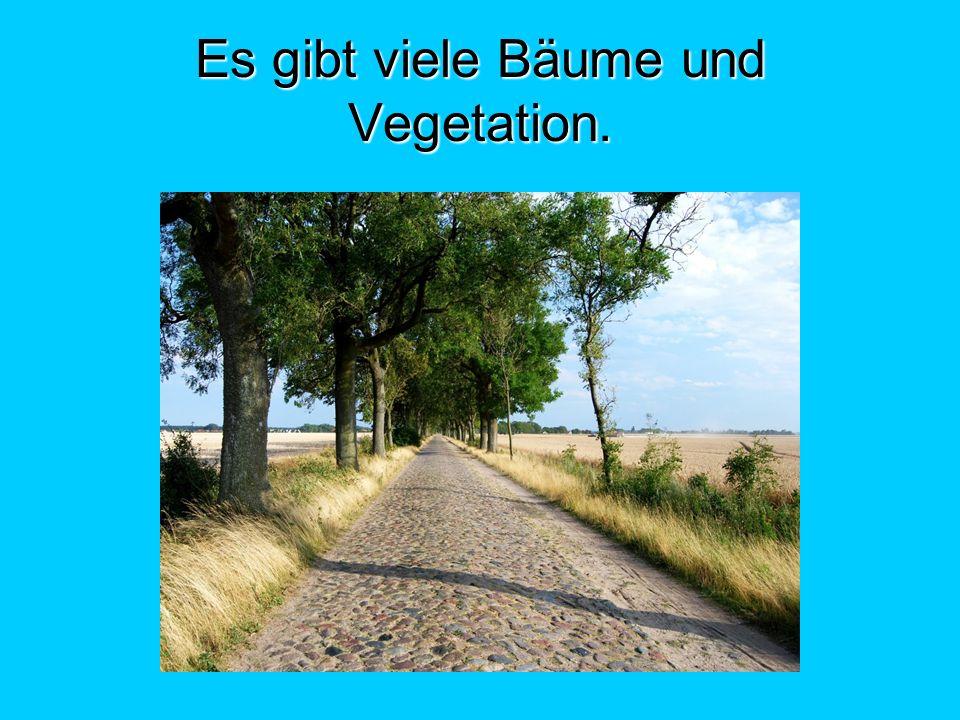 Es gibt viele Bäume und Vegetation.