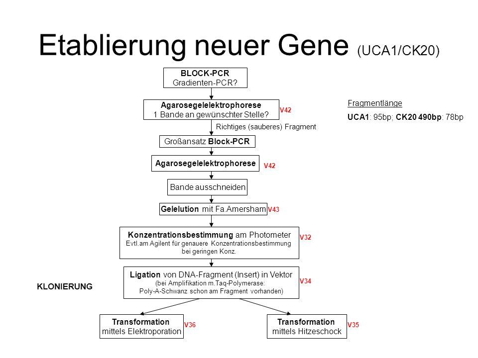 Etablierung neuer Gene (UCA1/CK20)
