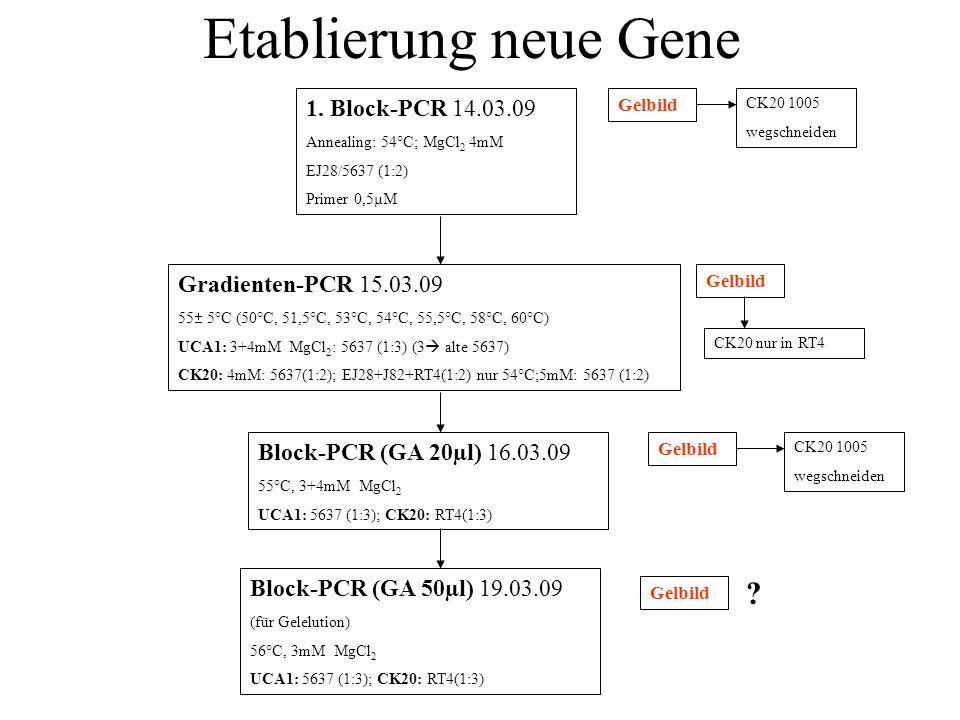 Etablierung neue Gene 1. Block-PCR 14.03.09 Gradienten-PCR 15.03.09
