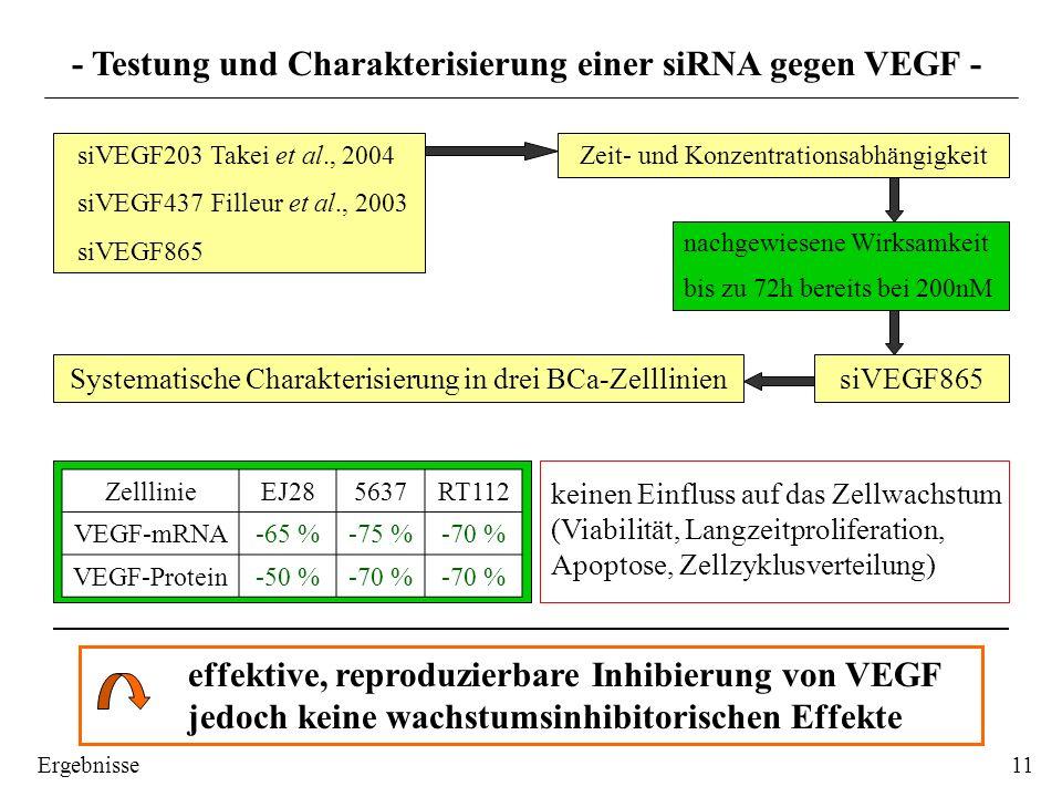 - Testung und Charakterisierung einer siRNA gegen VEGF -