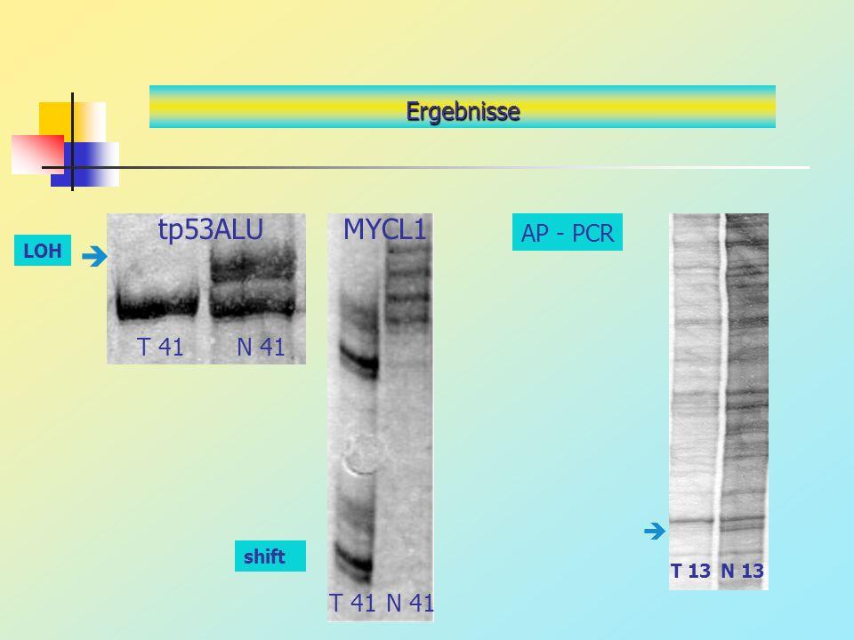 tp53ALU MYCL1  Ergebnisse AP - PCR T 41 N 41  T 41 N 41 LOH shift