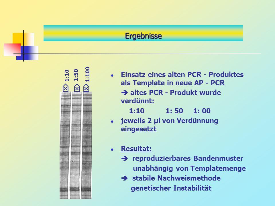 Ergebnisse 1:100. Einsatz eines alten PCR - Produktes als Template in neue AP - PCR.  altes PCR - Produkt wurde verdünnt: