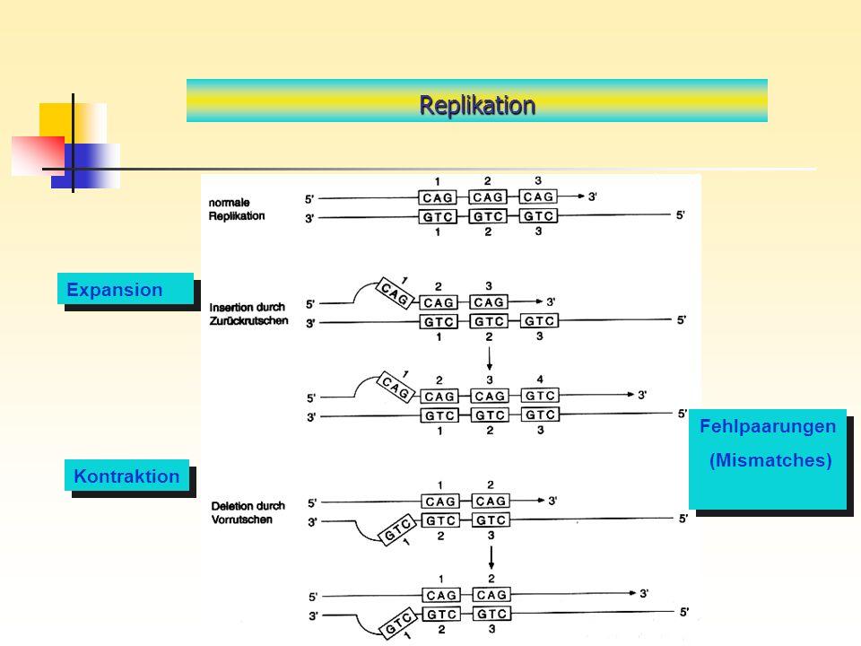 Replikation Expansion Fehlpaarungen (Mismatches) Kontraktion