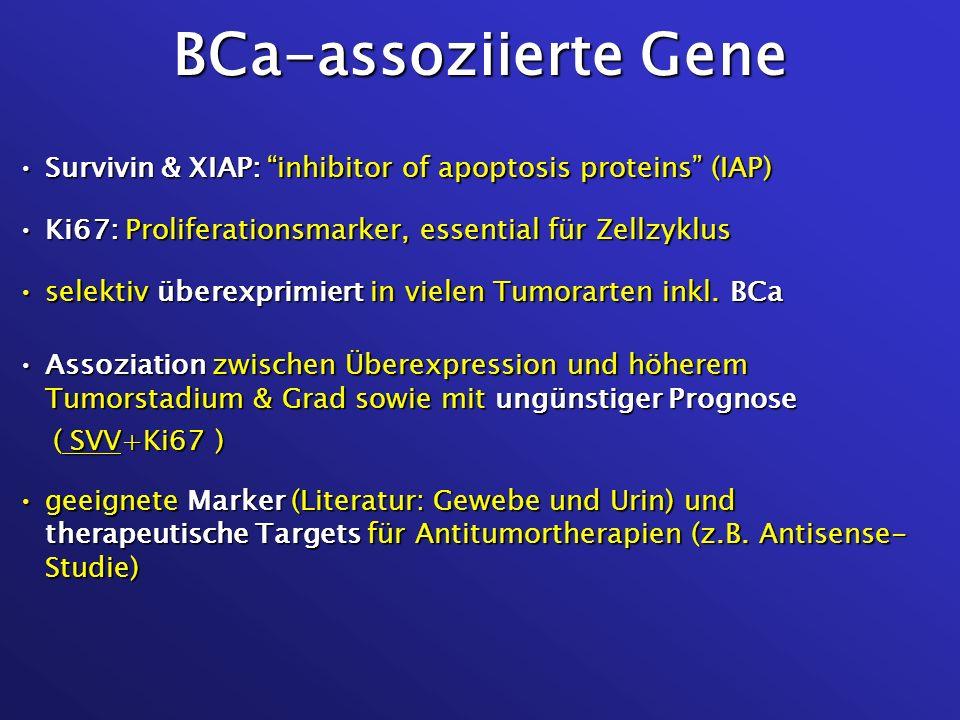 BCa-assoziierte GeneSurvivin & XIAP: inhibitor of apoptosis proteins (IAP) Ki67: Proliferationsmarker, essential für Zellzyklus.