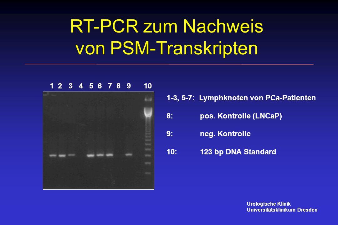 RT-PCR zum Nachweis von PSM-Transkripten 1 2 3 4 5 6 7 8 9 10