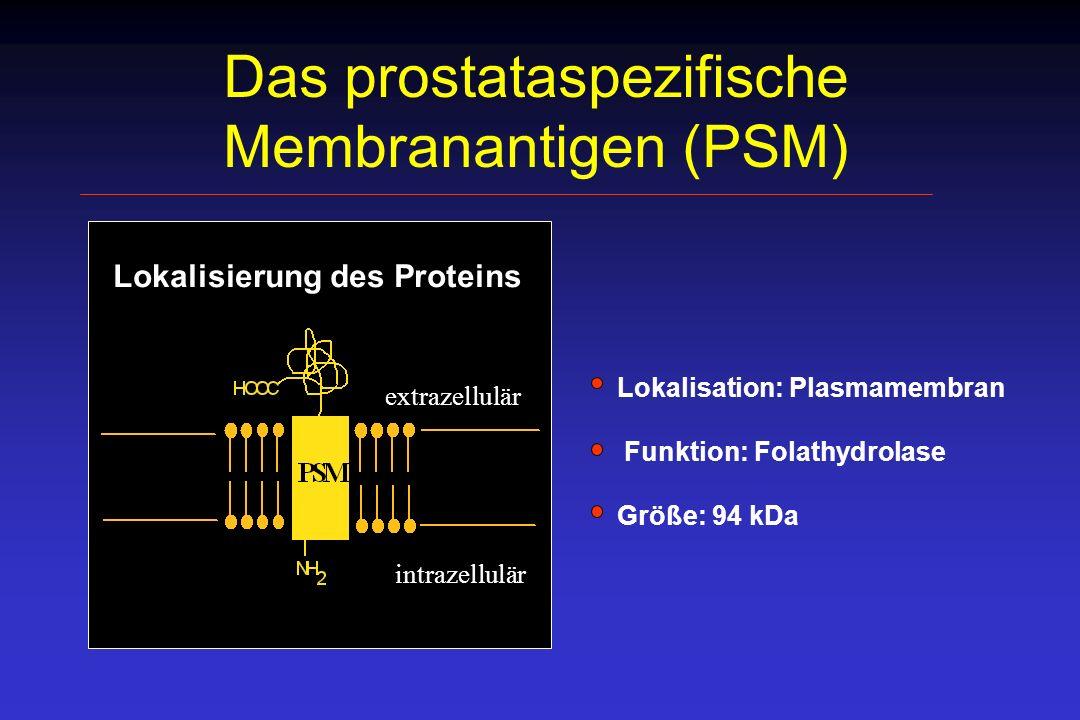Das prostataspezifische Membranantigen (PSM)