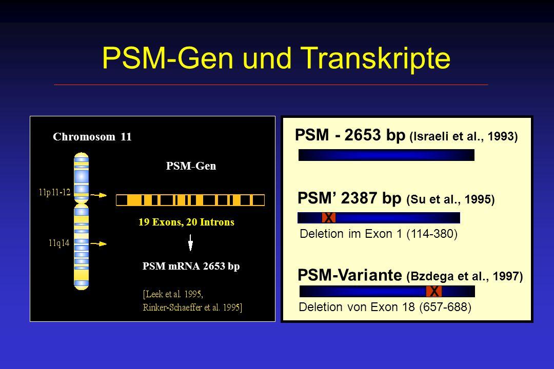 PSM-Gen und Transkripte