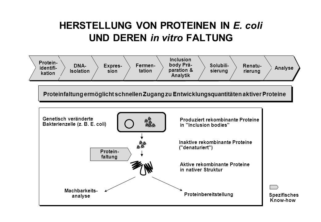 HERSTELLUNG VON PROTEINEN IN E. coli UND DEREN in vitro FALTUNG