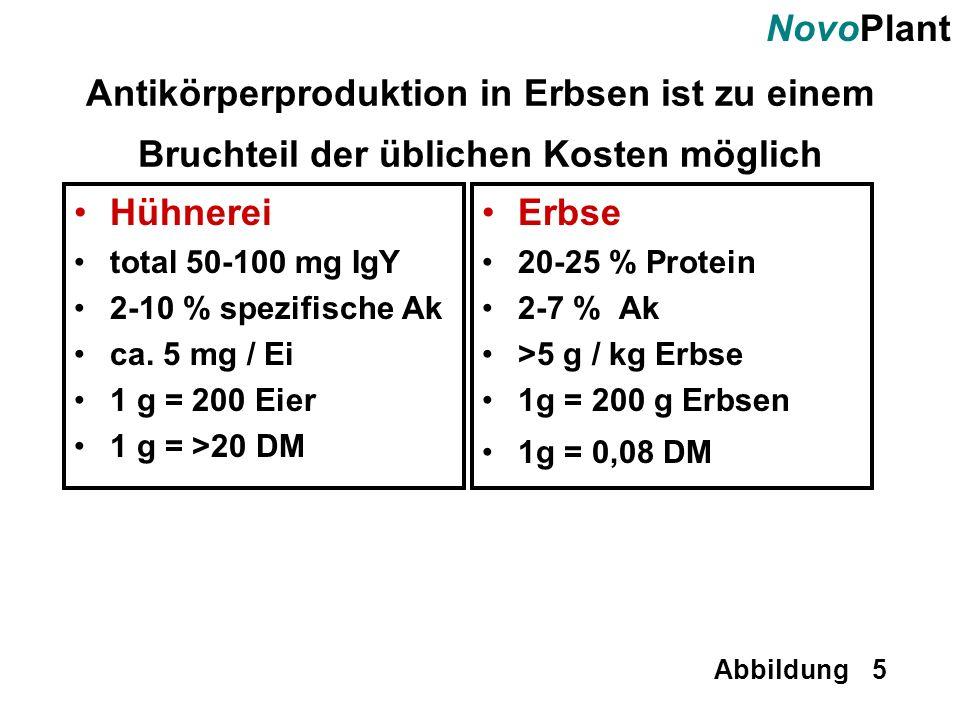 Antikörperproduktion in Erbsen ist zu einem Bruchteil der üblichen Kosten möglich