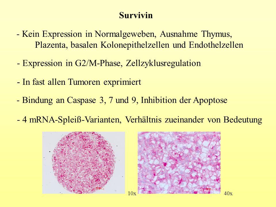 Kein Expression in Normalgeweben, Ausnahme Thymus,