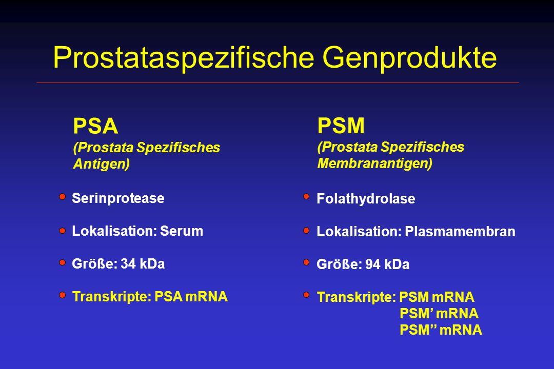 Prostataspezifische Genprodukte