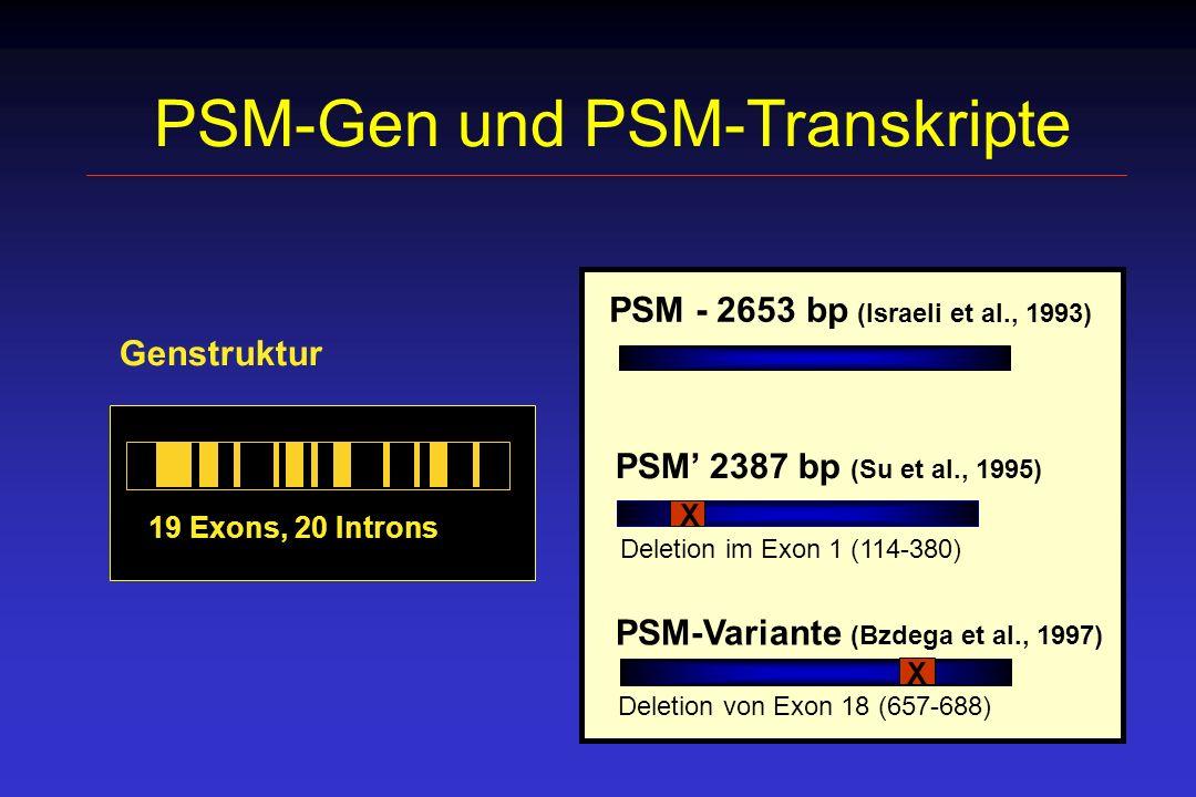 PSM-Gen und PSM-Transkripte
